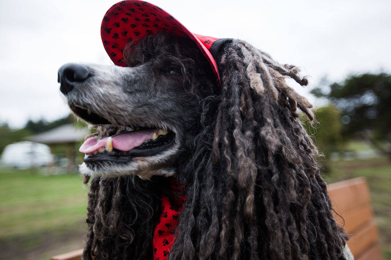 Rielley wears a custom hat and bandana at Freeland Park. (Olivia Vanni / The Herald)